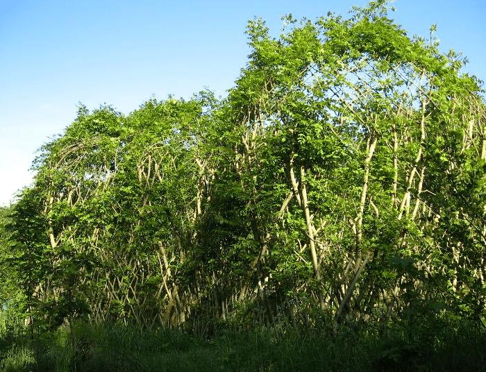 Waldgartendorf Eschenhaus